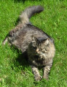 Alison cat