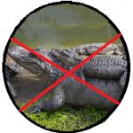 alligator-min
