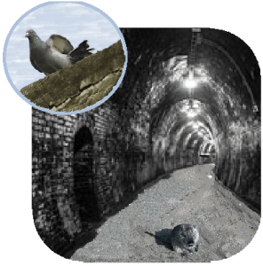 Neverwhere Rats and Pigeons Messangers